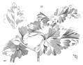 Chrysanteme.png