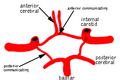 Circle of willis.png