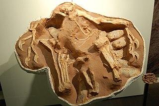 <i>Citipati</i> Genus of oviraptorid dinosaur from the Late Cretaceous period