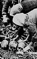 Collecting Remains of the War Dead in Okinawa 01.jpg