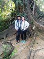 Community Baboon Sanctuary Fig Tree - Flickr - GregTheBusker.jpg