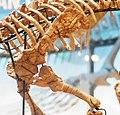 Convolosaurus forelimb.jpg