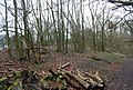 Coppiced woodland by the Hangers Way, Oakshott Hanger - geograph.org.uk - 1200836.jpg