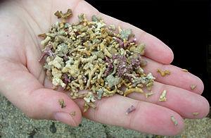 "Maerl - Maerl fragments, Trá an Doilin, Maerl Beach (incorrectly known as ""Coral Strand"") Carraroe, County Galway, Ireland"