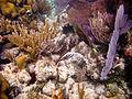 Coral Reef (6022423870).jpg