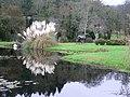 Cortaderia selloana - panoramio.jpg