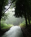 Country road near Hermitage (2) - geograph.org.uk - 2281484.jpg