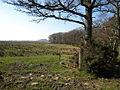 Craigintier Woods - geograph.org.uk - 375365.jpg