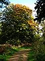 Creech Woods - geograph.org.uk - 1023760.jpg