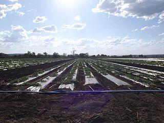Lower Tenthill, Queensland Suburb of Lockyer Valley Region, Queensland, Australia