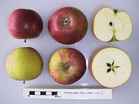 Cross section of Frydeland Cox, National Fruit Collection (acc. 1984-176).jpg