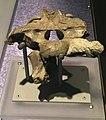 Cryolophosaurus braincase.jpg