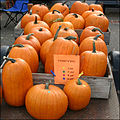 Cucurbita pepo Pumpkins on sale.jpg