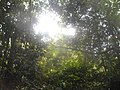 Džungla u Kepu.jpg