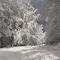 December, დეკემბერი საბადურის ტყეში - panoramio.jpg