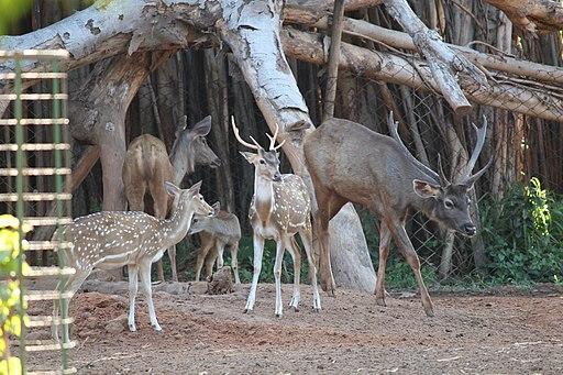 Indira Gandhi Zoological Park/Visakhapatnam Zoo