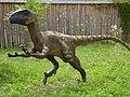 Deinonychus model Baltow.jpg