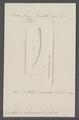 Dentalium eburneum - - Print - Iconographia Zoologica - Special Collections University of Amsterdam - UBAINV0274 081 10 0011.tif