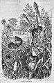 Die Gartenlaube (1863) b 765.jpg
