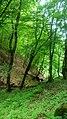 Dilijan National Park, Path way to Aghavnavank 38.jpg