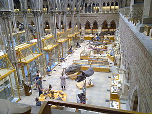 Oxford University Museum of Natural History - The Dinosaur Gallery of the Museum