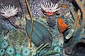 Diorama of a Devonian seafloor - crinoids, trilobites, fenestrate bryozoan, corals (43838403800).jpg