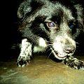 Dog in nepal.jpg