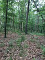 Dogwood Ridge Trail Forest 44 2018 2.jpg