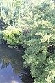 Douze (rivière) à Mont-de-Marsan 2019 6807.jpg