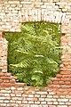 Drvenste vrste biljaka, Niška tvrđava, Niš, Srbija (184).jpg