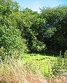 Duckweed-covered mere, Chorley Stock - geograph.org.uk - 202155.jpg