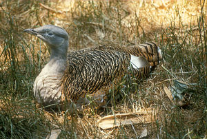 Lake Bujon National Park - The park is an important site for great bustards