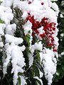 Early snow in Torino (5216960765).jpg
