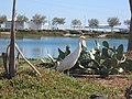 Egypt, Hurghada, 2014. - panoramio (14).jpg