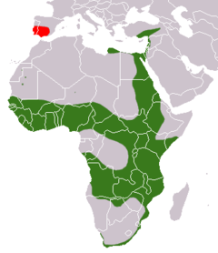 Distribución del meloncillo(verde - nativo, rojo - introducido)