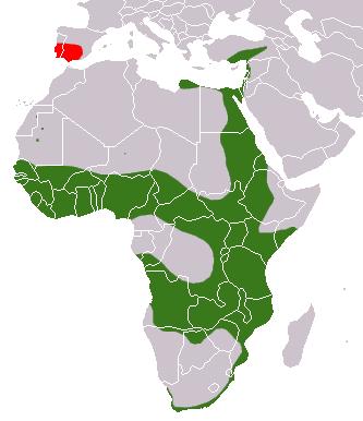 Egyptian Mongoose area