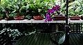 El Salvador - San Salvador, Latin Top Jobs Garden - panoramio (57).jpg