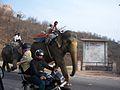 Elephants! (4188497215).jpg