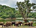 Elephants in Herbivore Safari, Bannerghatta Reserve Forest, Bengaluru, Karnataka.jpg