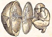 Embryonalentwicklung (Jakob Ruf).png