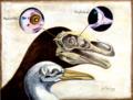 Embryonic dinosaur bones.tif