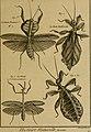 Encyclopédie méthodique - Histoire naturelle (1789) (14597574607).jpg