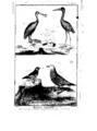 Encyclopedie volume 5-082.png