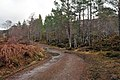 Estate road near Kinlochewe - geograph.org.uk - 1739241.jpg