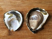 Black oyster pearl