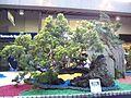 Exposición Bonsai 2008 Feria de Flores-05.JPG