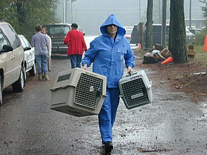 International Fund for Animal Welfare - In the aftermath of Hurricane Floyd, animal rescue efforts continue throughout eastern North Carolina as volunteers care for hundreds of lost and abandoned pets. Shirley Minshew of the International Fund for Animal Welfare carries empty pet carriers to the animal shelter in Tarboro, North Carolina.