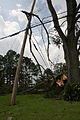 FEMA - 37927 - Tree entangled in a power line in Louisiana.jpg