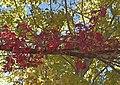 Fall Colors northern NM 2009.jpg