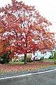 Fall in Johnstown - panoramio (2).jpg